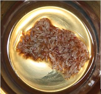 Grafts kept in Platelet Rich Plasma